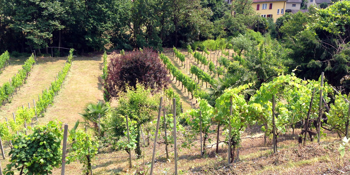 Management and care of the vineyards and fallow land