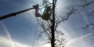 Pruning tall trees